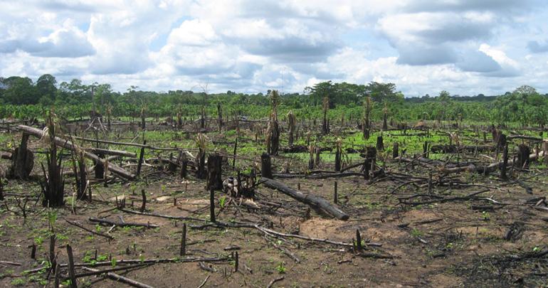 Amazon Rainforest Conservacy